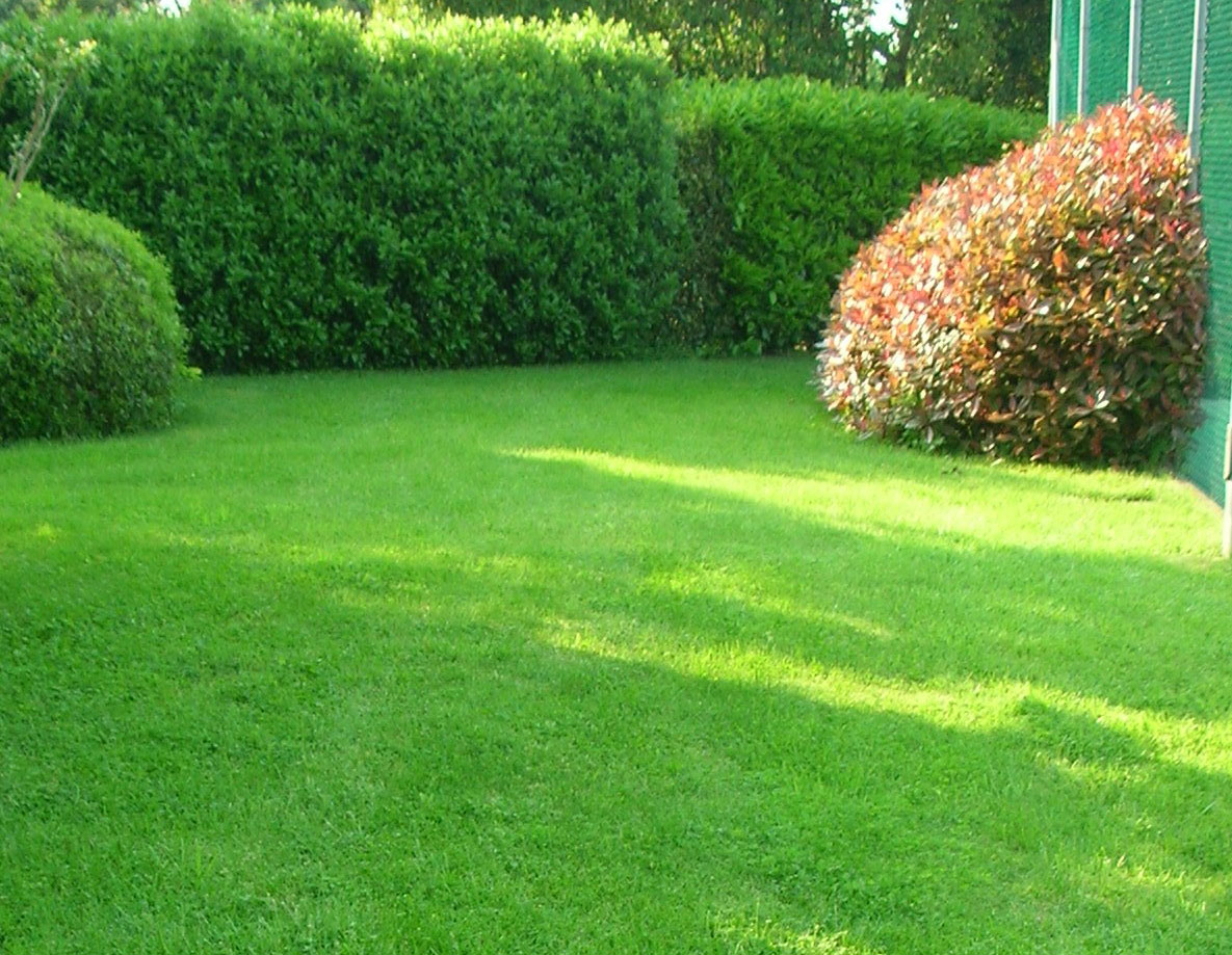 In giardino le stagioni garden club ravenna - Giardino in inglese ...